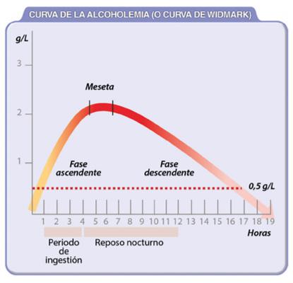 horas-no-dar-positivo-en-alcohol-curva-widmark